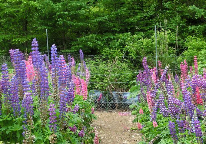 「中村農園」の園内を散策してみよう!