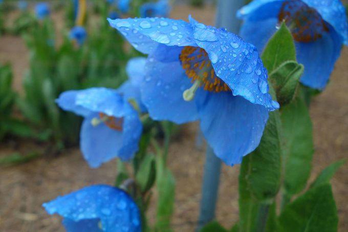 ベストは一番花が咲く6月中旬頃の午前中!