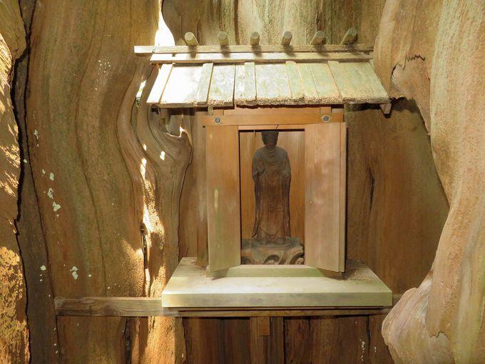 まずは拝殿へ。御神木で寿命がのびるご利益も!