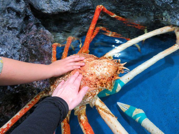 深海生物の展示数は日本一!