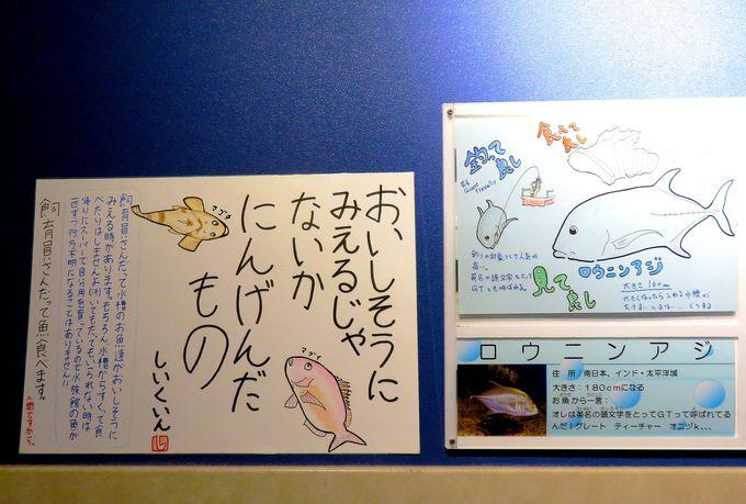 ネタ満載!日本一解説が読まれている水族館