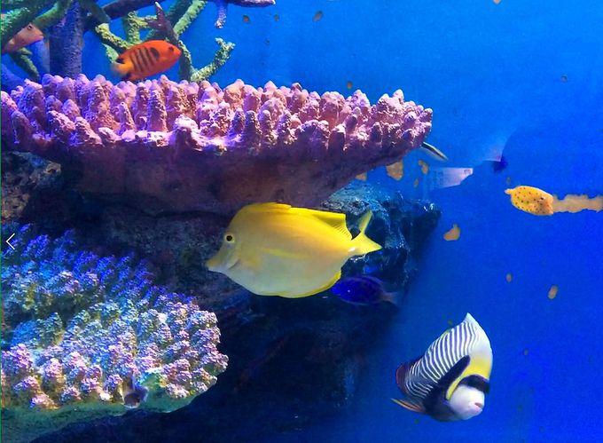 竹島水族館(通称:タケスイ)は、めっちゃ面白い!