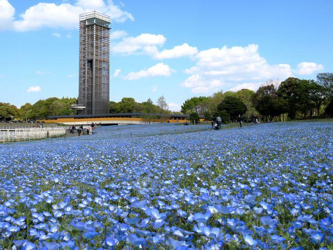 春は「約30万本のネモフィラ」や「花の美術館」の春景色!