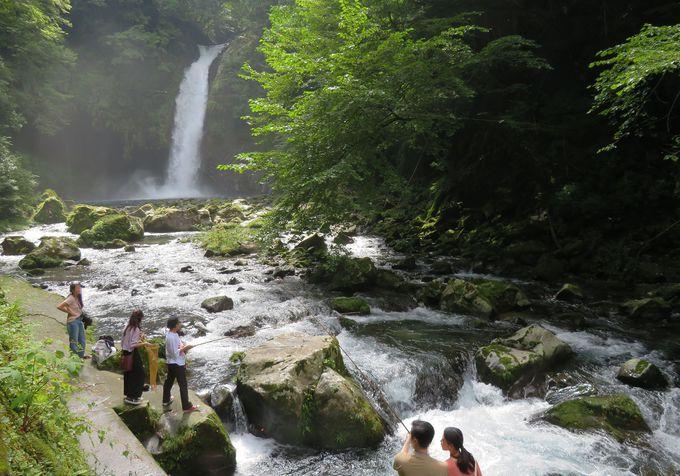 滝を眺めながら、渓流釣りが楽しめる!