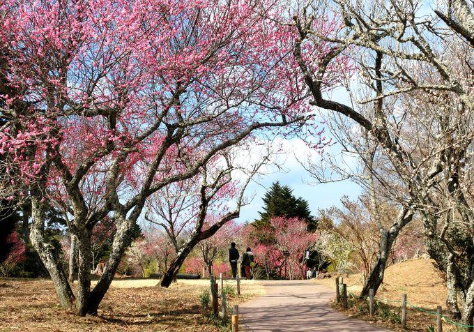 伊豆の小京都・修善寺で春の訪れを楽しもう!