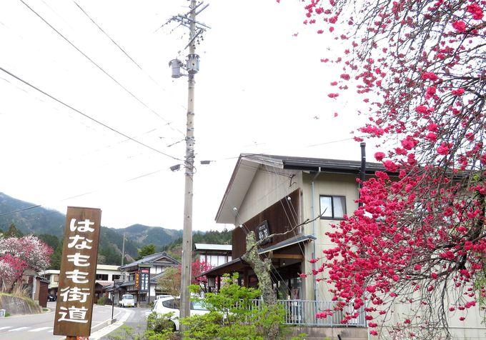 いよいよ木曽谷!江戸時代の町並みが残る「妻籠宿」へ