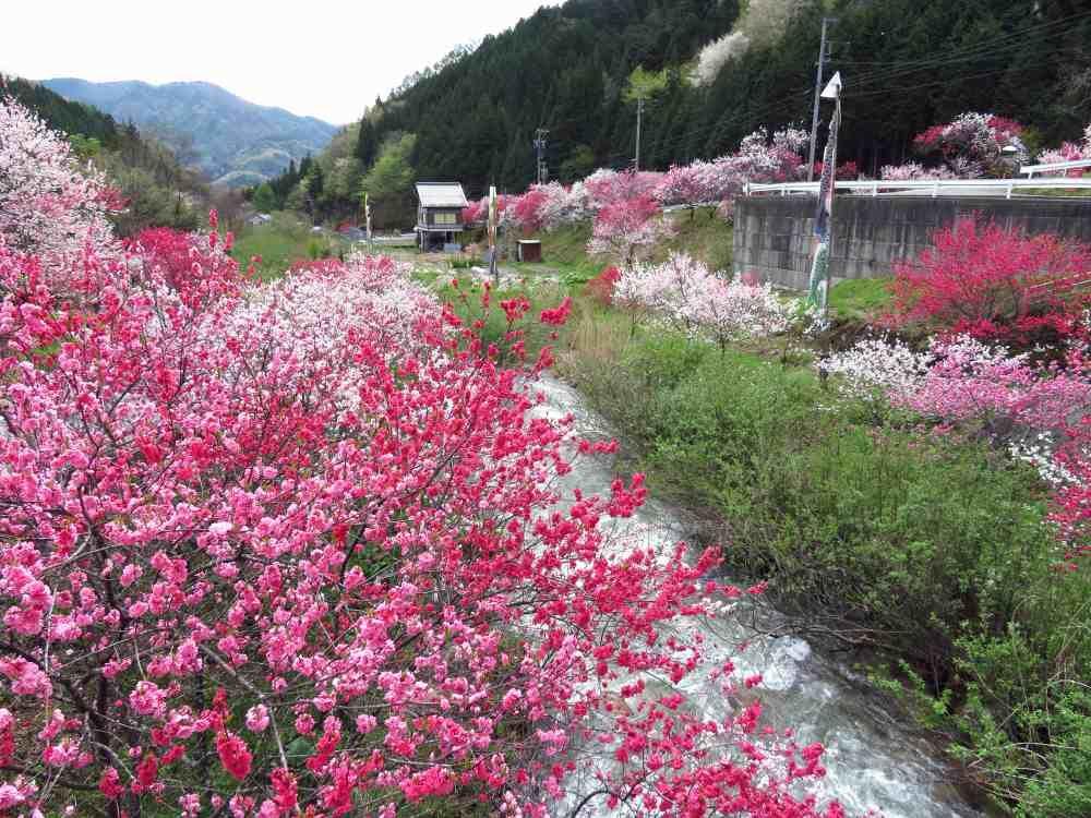 花桃に一番清水!伊那谷と木曽谷の中間地点「清内路」