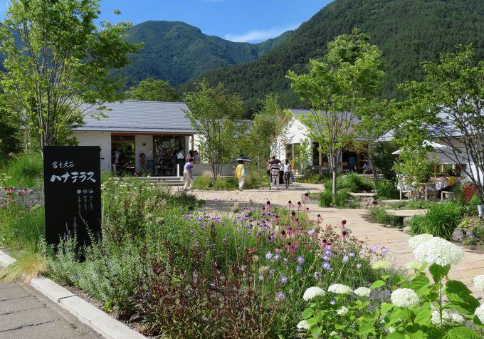 園内には絶景カフェも!おしゃれな富士大石ハナテラスに隣接