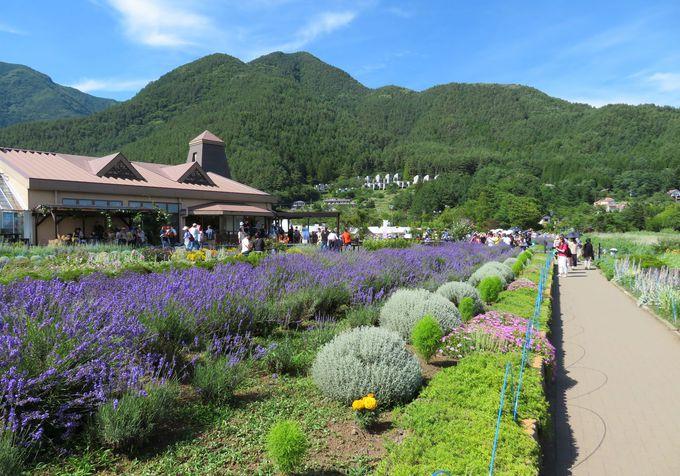大石会場は「ラベンダーと湖と富士山」の超絶景スポット!