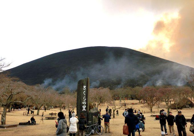 大迫力の「山焼き」!季節によって色を変える大室山