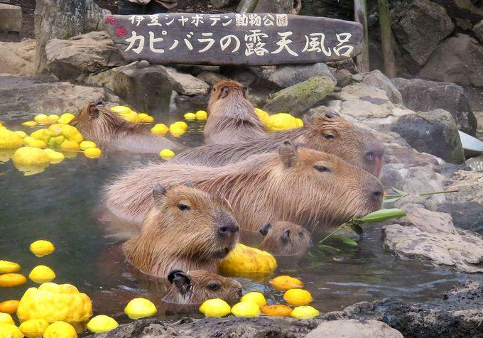 「さくらの里」と「伊豆シャボテン動物公園」もお薦め!