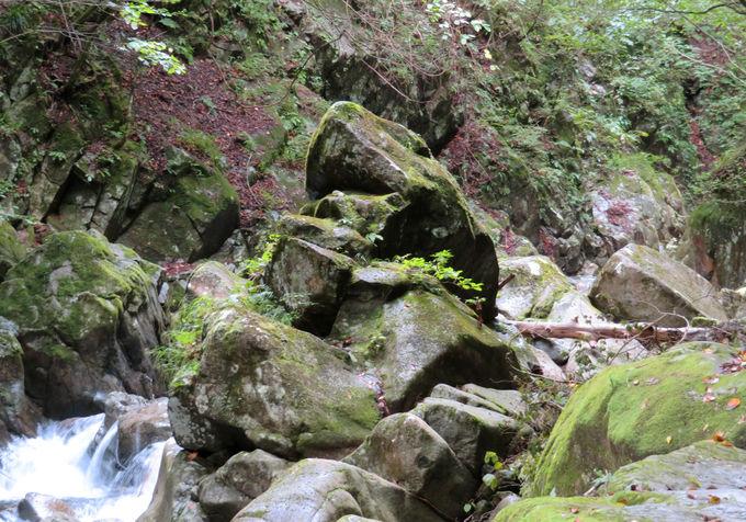 間近で眺められる「貞泉の滝」!母胎淵やカエル岩も面白い