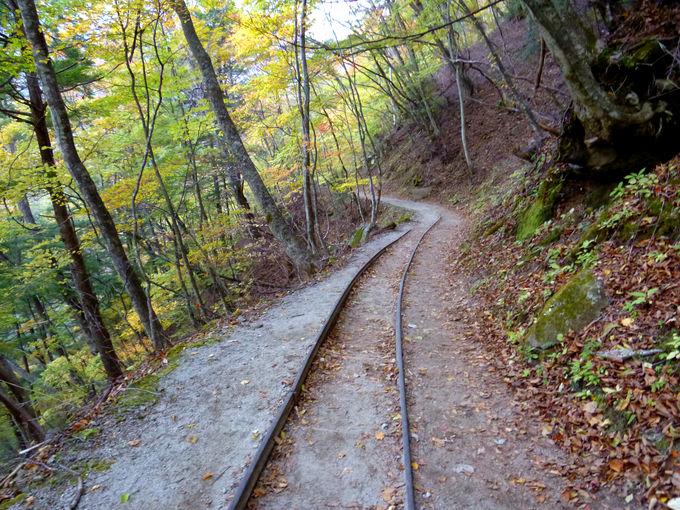 旧森林軌道や大展望台を楽しみながら下山!