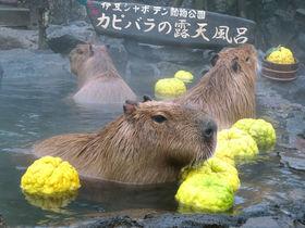 元祖カピバラの露天風呂!伊豆シャボテン動物公園の冬は大盛り上がり
