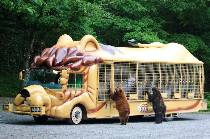 動物達にワクワクのエサあげ!一番人気のジャングルバス