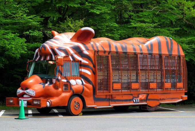 富士サファリパークで動物達と大接近しよう!