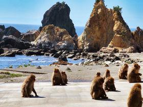 「波勝崎モンキーベイ」野生のサルとふれあい!南伊豆の絶景岬へGo