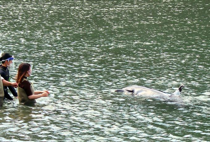 自分に合った方法で、イルカとふれあおう!