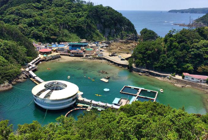 伊豆「下田海中水族館」でイルカと遊ぼう!ハイレベルなショーは必見