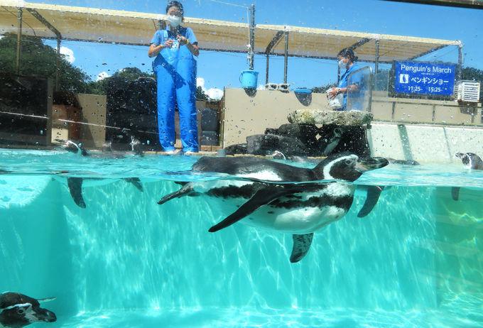 可愛いペンギンのお散歩に、迫力のワンダー・オーシャン!