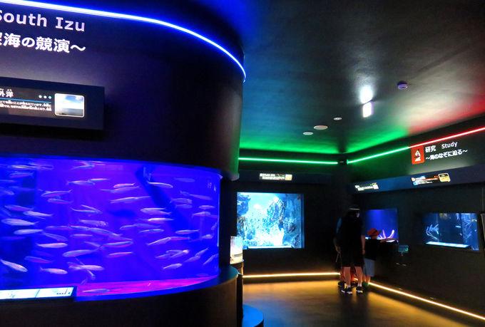 自然の入江を利用!「下田海中水族館」とは