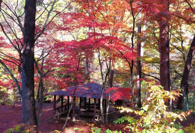 昇仙峡の玄関口「長潭橋」!まずは紅葉の名所「天鼓林」へ