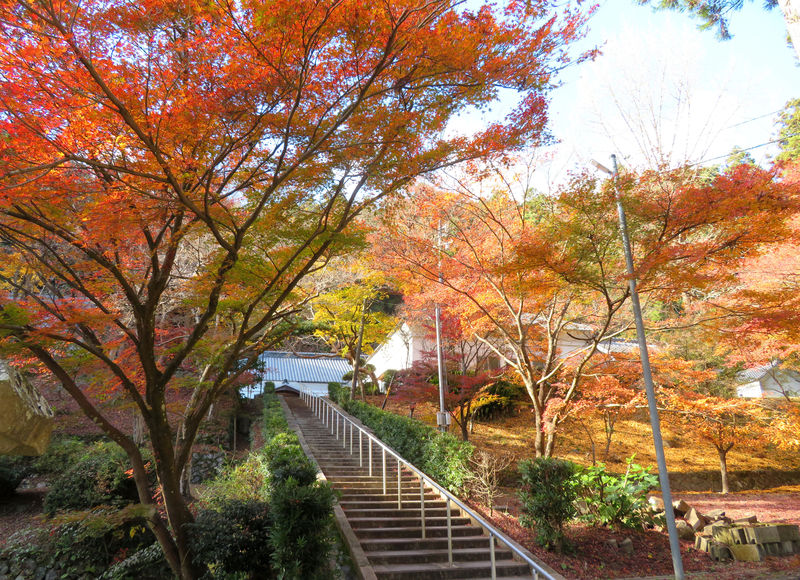 静岡「大洞院」の紅葉が凄い!森の石松で知られる隠れた名所とは