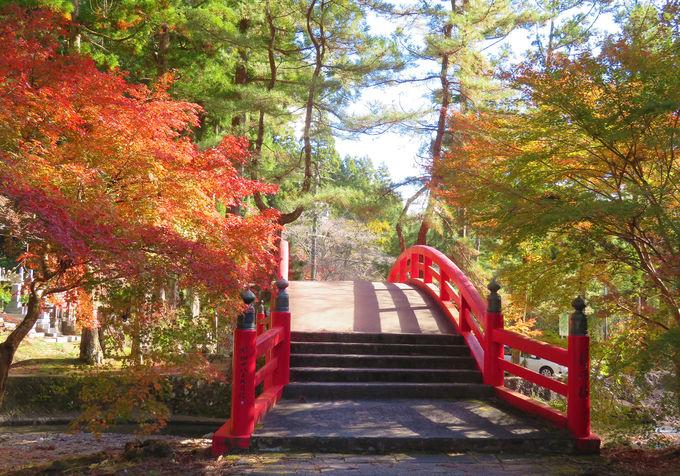 紅葉に彩られた境内を散策!