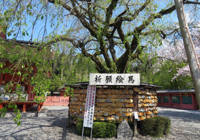 浅間大社は桜の名所!「富士宮やきそば」も見逃せない