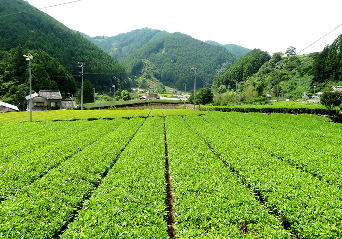 「お茶農家の古民家カフェ かつやま」で癒しの時間を!