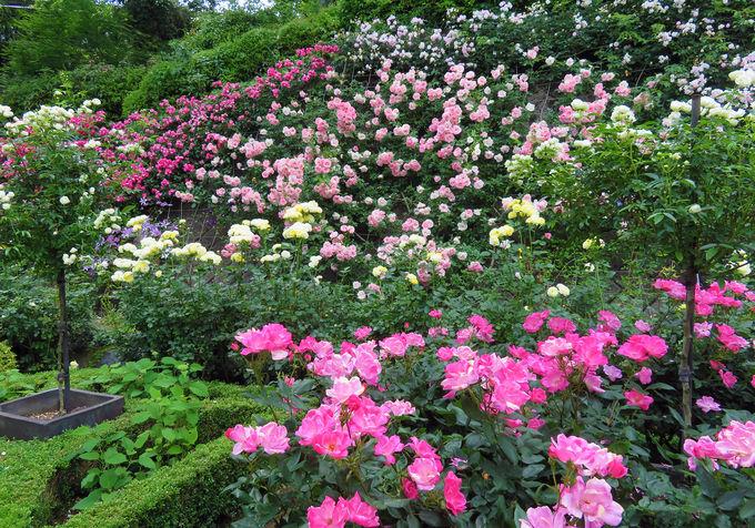 クレマチスをはじめ四季の花々を堪能!