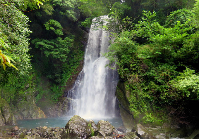 行きついた感動はひとしお!秘境の名瀑「大滝」(西伊豆町)