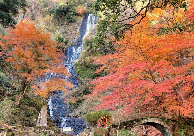 石垣を積んだような自然の驚異の造形!「旭滝」(伊豆市)