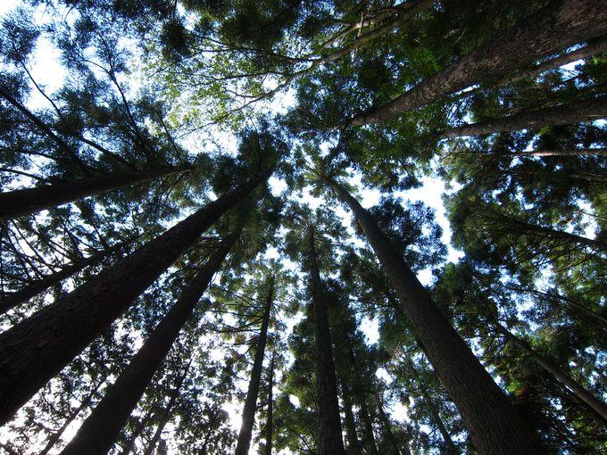 森で寝転んで、森の音を聞いて…自然と一体に
