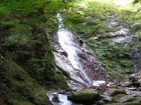 ストレス解消に!神奈川・山北町の「森林セラピー」で癒されよう