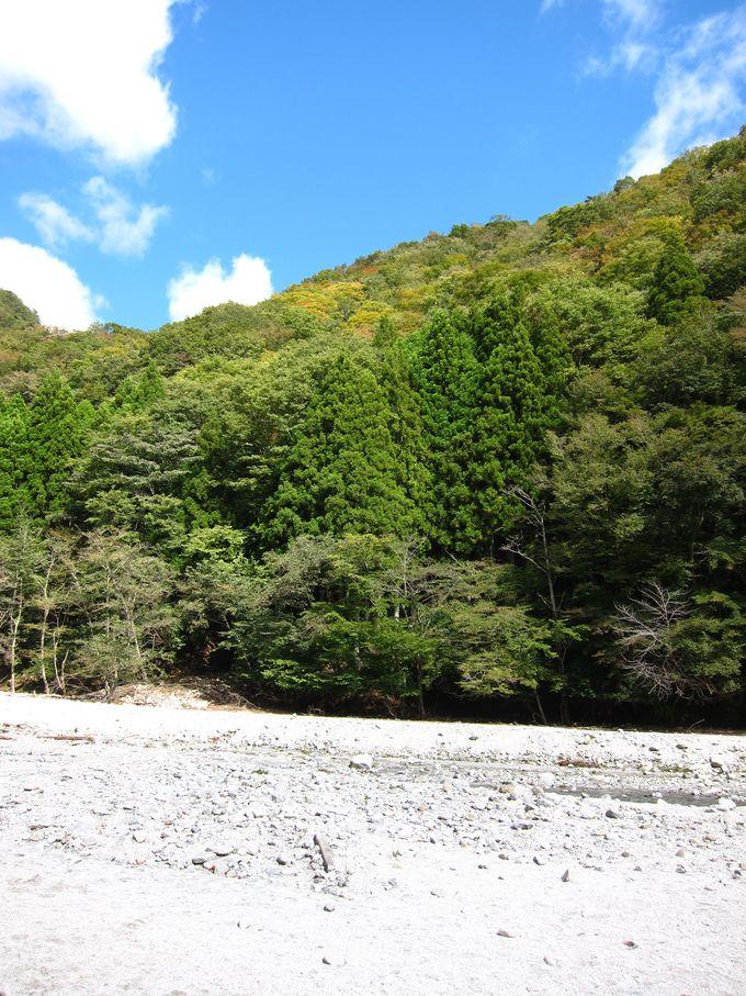 森林浴で健康に!科学的に効果が実証された「森林セラピー」