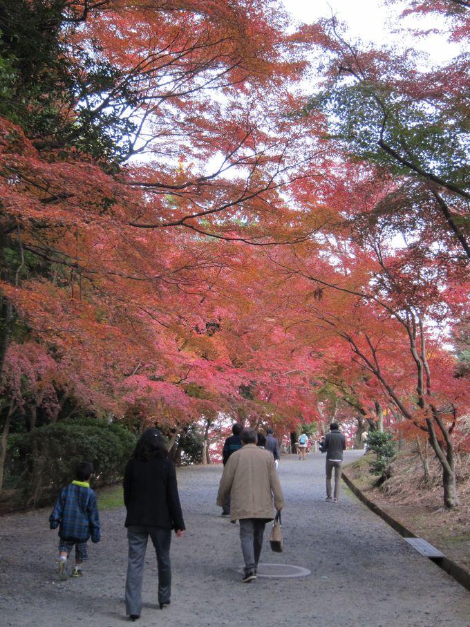最大のみどころは紅葉トンネル、その先は琵琶湖も望める観音堂