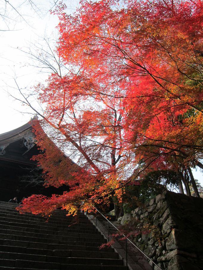 向かう道中も楽しい、紅葉のみどころ豊富な三井寺