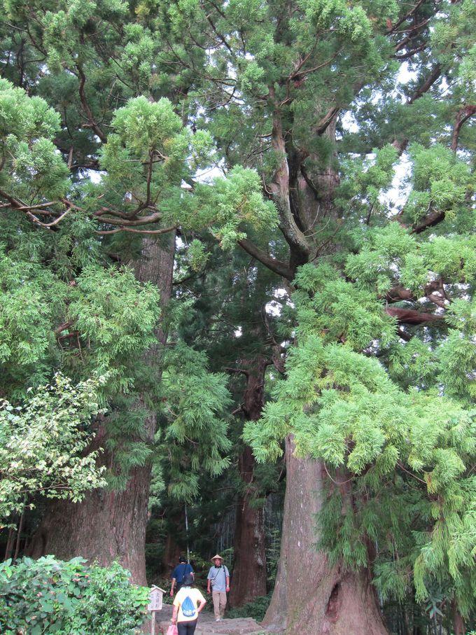 パワースポット・熊野古道の雰囲気抜群の道のり