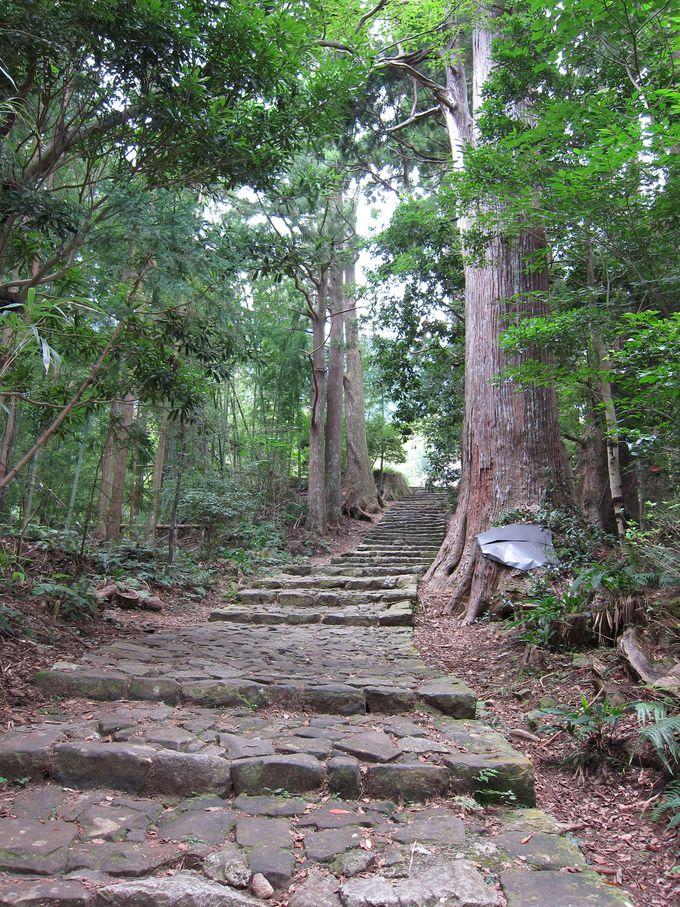 ビギナー向き!石畳の階段が美しい大門坂〜熊野那智大社のコース