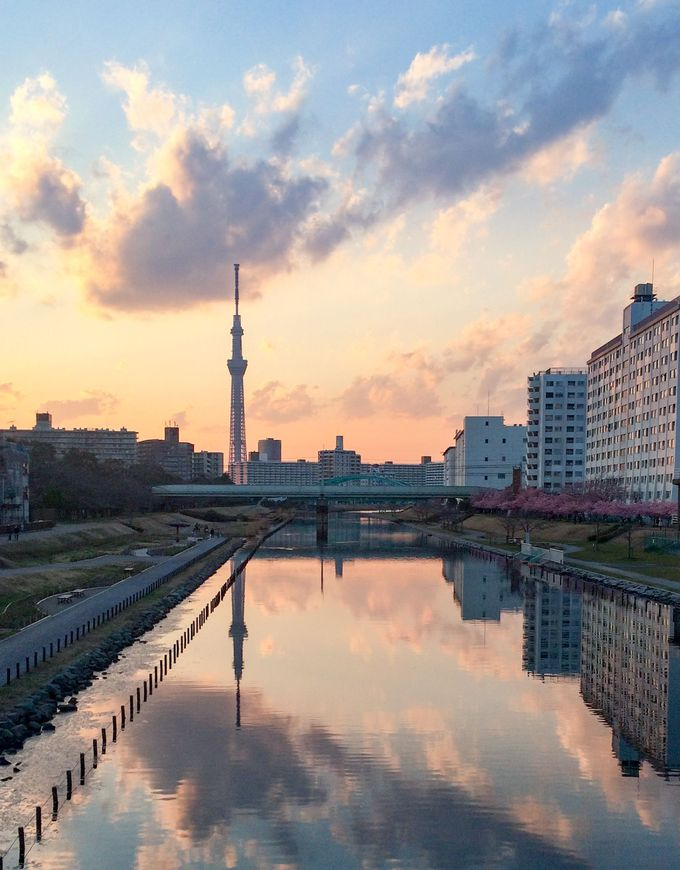 川面に写る河津桜×スカイツリーの風景も見逃せない!