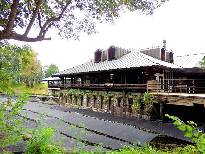 わさび田を眺めながら、オリジナルのわさび料理を味わえるレストラン