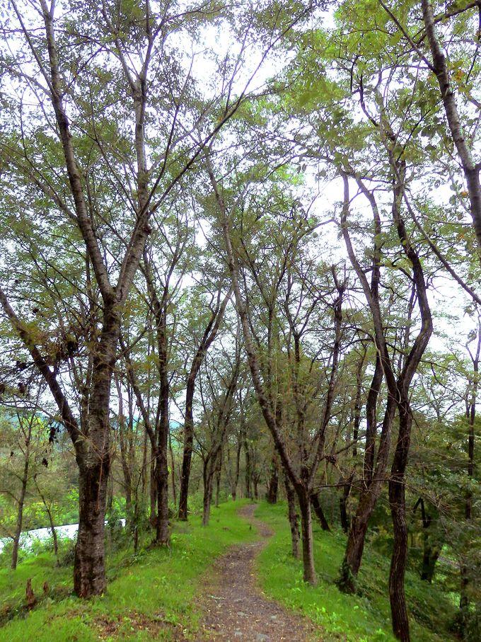 安曇野の自然を静かに味わう、涼風の小道