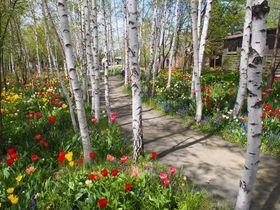絵本のような可愛い庭が広がる旭川・上野ファームで妖精を探そう!