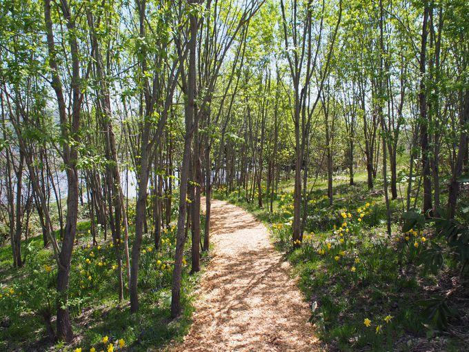 木漏れ日が気持ちいい「ノームの散歩道」