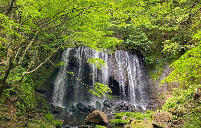 福島・猪苗代「達沢不動滝」は原生林に囲まれた名瀑!