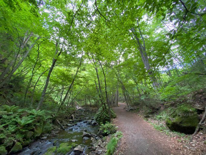 駐車場からは原生林の中を歩いて滝へ