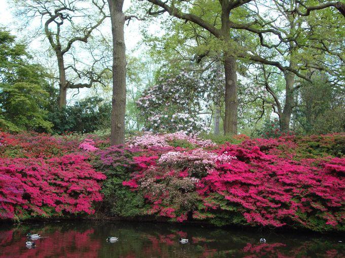 ツツジの季節が最も美しい「イザベラ プランテーション」
