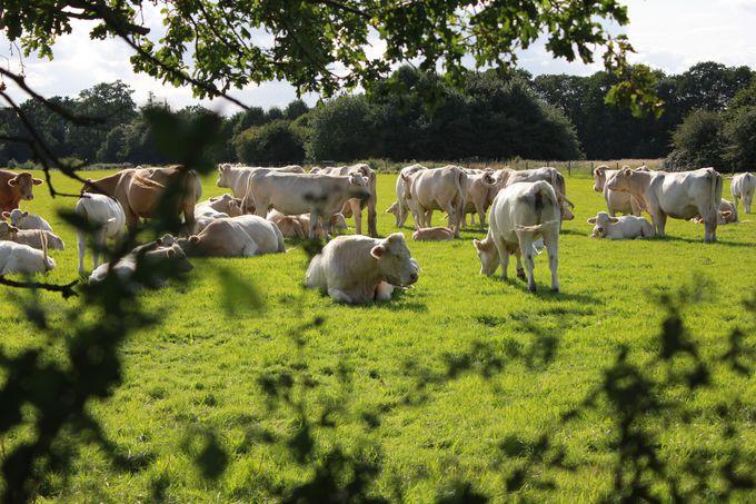 愛らしい馬や牛に出会える憩いの場所「オスタリーパーク」