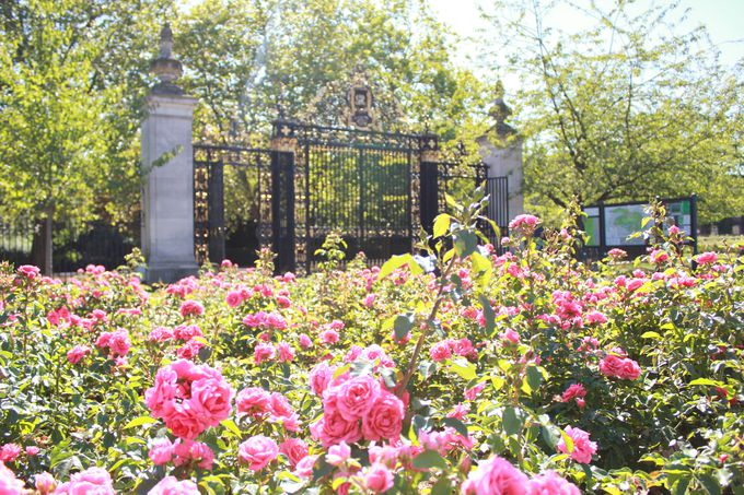 6月上旬〜9月:バラ in クィーン メアリーズ ガーデン
